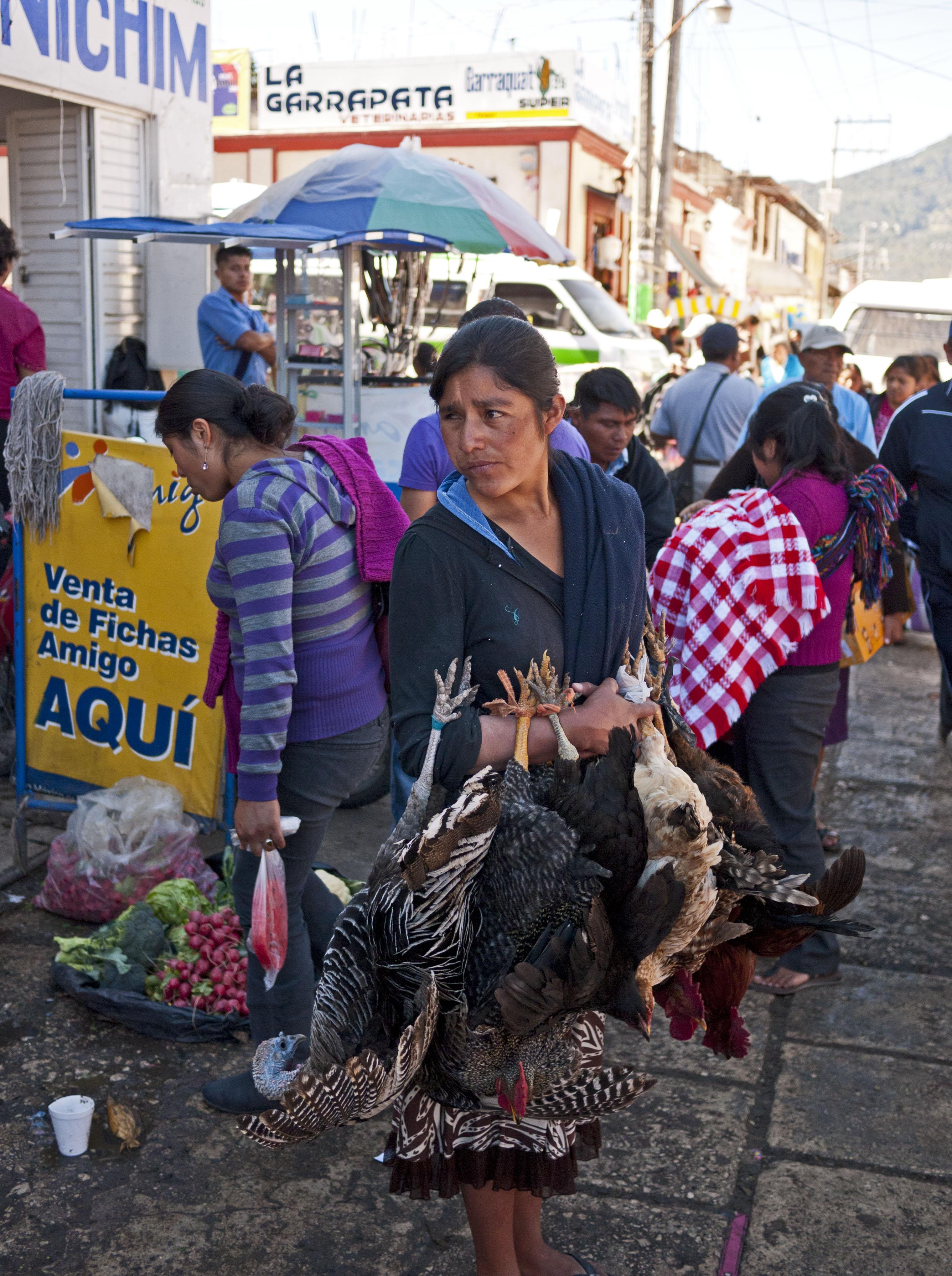 san cristobal de las casas single jewish girls Global wanderer stephanie elizondo griest goes native in mexican enough by o lani, san  it is the same single-minded  29240 san cristóbal de las casas.