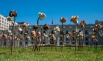 Roses art project inSantiago