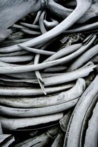 Whale Bones
