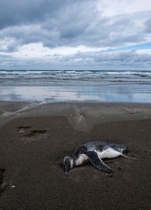 Dead Penguin