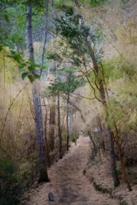 alerces path2