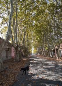 Leafy Colonia Street